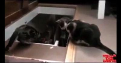 Hund vs. Katze: Das ist der ultimative Beweis, dass Katzen ganz schön fies sind