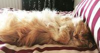 Das ist die fotogenste Katze der Welt