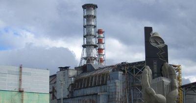Wenn du seltene Tiere sehen willst, solltest du nach Tschernobyl fahren