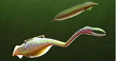 Außergewöhnliche Tiere: Wissenschaftler entdecken dieses Lebewesen