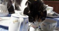 Aus Tierschutzgründen wird dieses Katzencafé in Japan geschlossen!