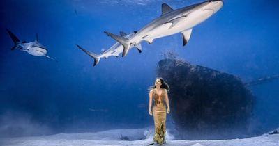 Fashion-Shooting unter HAIEN - Im Abendkleid am Meeresgrund!