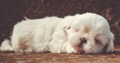 Mit DIESEN Tricks wird jeder Hund dein bester Freund!