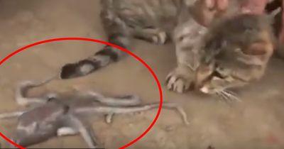 OKTOPUS greift Katze an!!!!
