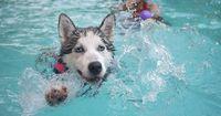 Diese Hunde sind wahre Wasserratten!