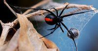 Spinnenattacke auf der Toilette!