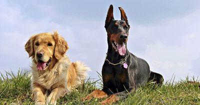 Dieses Hundespielzeug wird dir und deinem Vierbeiner eine geniale Zeit bescheren!