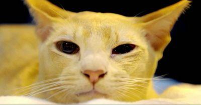 Diese Katze wird eines Verbrechens beschuldigt!