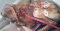 Als dieser Hund gefunden wurde, war er mit Tumoren übersäht!
