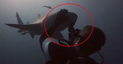 Dieser Taucher knuddelt mit Haien!