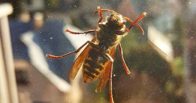 Heftiges Video: Diese Biene hat Superkräfte