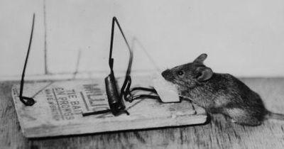 Eine Maus auf humane Weise fangen - so geht's!