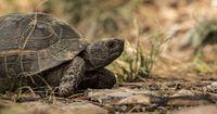 Das ist wohl die schnellste Schildkröte der Welt