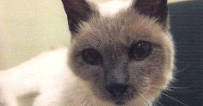 DAS ist offiziell die älteste lebende Katze der Welt!