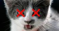 Dieser armen Katze mussten die Augen entfernt werden