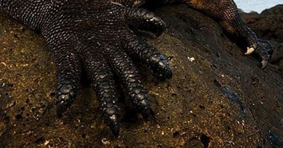 Dieses Seeungeheuer sieht aus wie Godzilla...