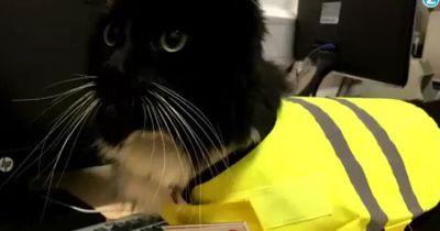 Arbeitstier: Diese Katze hat einen festen Job!