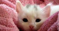 Diese Katze wurde wegen ihrer Behinderung ausgesetzt!