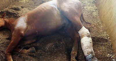 Dieses Pferd wurde lebendig im Schlamm vergraben!