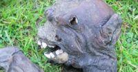 DIESES Tier versetzt alle in Angst und Schrecken!