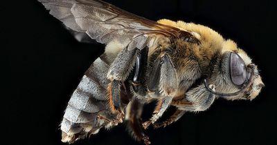 Gibt es bald keinen Honig mehr?!