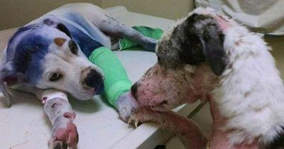 Diese jungen Hunde eint ein grausames Schicksal!