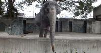 Deswegen war dieser Elefant sein Leben lang allein!