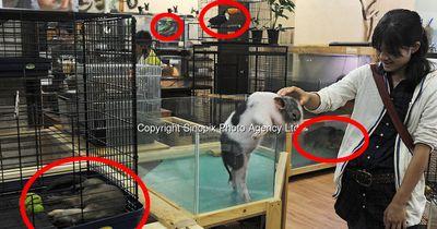 Kein Tiergeschäft wird SO gehasst wie dieses!