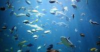 Rätsel: Wie viele Fische sind im Aquarium?