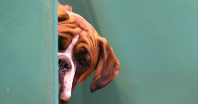 Dein Hund kennt dich besser als du denkst!