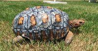 UNGLAUBLICH! Diese Schildkröte überlebt schwer verletzt einen Waldbrandt!