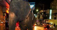 Dieser Elefant schlägt zurück!