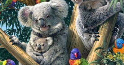 Wie viele Koalas sind in diesem Bild versteckt?