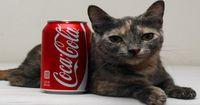 Sie ist die kleinste Katze der Welt