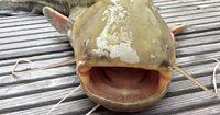 Nachdem sie diesen Fisch gefangen haben, fanden sie das in seinem Bauch!
