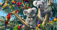 Wie viele Koalas sind auf diesem Bild versteckt?