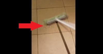 Deshalb solltest du Spinnen nicht mit einem Besen töten