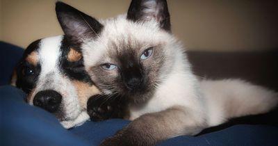 Katzen- & Hundebesitzer: Wenn euer Haustier dieses Symptom hat, solltet ihr sofort zum Tierarzt
