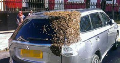 20.000 Bienen auf waghalsiger Rettungsmission!