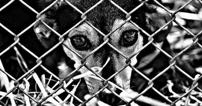 SO werden Tierquäler im Iran bestraft!