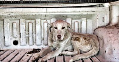 Dieser Hund musste bei seinen Besitzern durch die Hölle gehen!