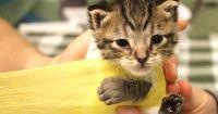 Diese Babykatze überlebte einen Hundeangriff. Doch der Preis dafür war hoch...