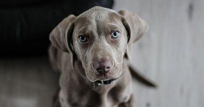 SO bindest du deinen Hund noch näher an dich!