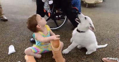 Diesem Hund fehlt eine Pfote — und er bekommt die perfekte Familie!