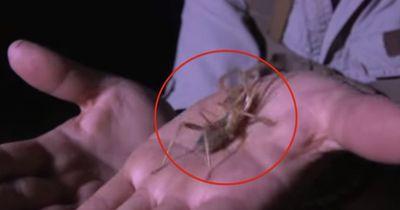 Die Spinne beißt in den Finger...