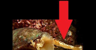 Bemerkenswertes Video: Eines der tödlichsten Tiere überhaupt