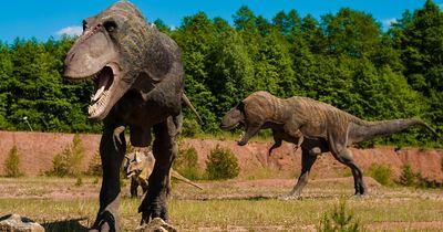 Außergewöhnlicher Fund: Dinosaurier waren wahrscheinlich auf Drogen