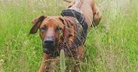 An alle Hundebesitzer: Deshalb bedecken Hunde ihren Kot mit Gras