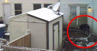 Er stellte eine Kamera auf, um den Hund von nebenan zu beobachten.