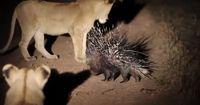 Das sind die gefährlichsten Tiere!